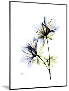 Artistic Azalea by Albert Koetsier