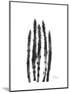 Asparagus by Albert Koetsier