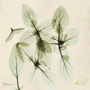 Basil Moment by Albert Koetsier