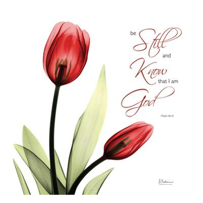 Be Still Tulip by Albert Koetsier