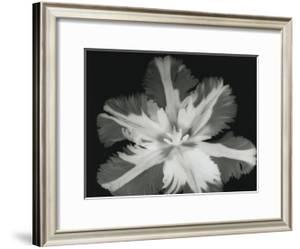 Big Blossom II by Albert Koetsier