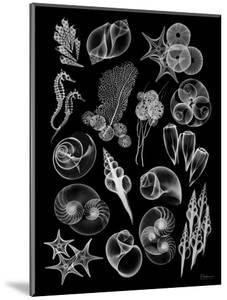 Black Sea by Albert Koetsier