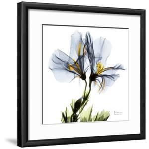 Blue Azalea in Bloom by Albert Koetsier