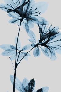 Blue Azalea by Albert Koetsier