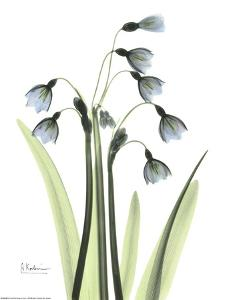 Blue Floral X-ray, Snowdrop by Albert Koetsier