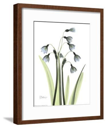 Blue Floral X-ray, Snowdrop