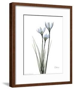 Blue Floral X-ray, White Rain Lily by Albert Koetsier
