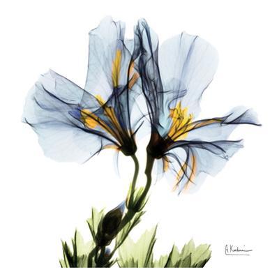 Blue Geranium by Albert Koetsier