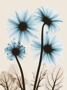 Blue Gerbera Bouquet by Albert Koetsier