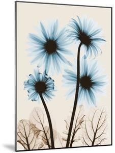 Blue Gerbera Bouquet by Albert Koetsier