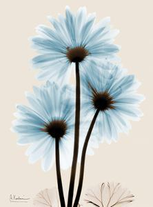 Blue Gerbera Triple by Albert Koetsier