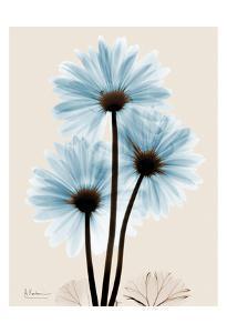 Blue Gerbera Triple by Albert Koetsier
