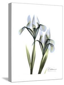 Blue Iris Pair by Albert Koetsier