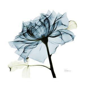 Blue Rose 2 by Albert Koetsier