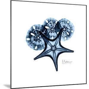 Blue Starfish 1 by Albert Koetsier