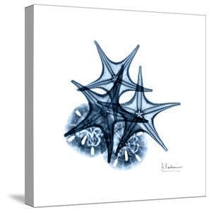 Blue Starfish 2 by Albert Koetsier
