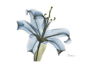 Blue Stargazer Lily by Albert Koetsier