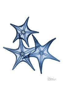 Blue Trio Starfish by Albert Koetsier