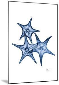 Blue Trio Starfish by Albert Koetsier