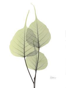 Bo Tree E111 by Albert Koetsier