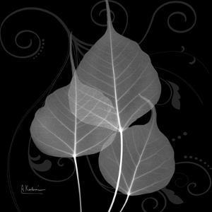 Bo Tree Leaf Xray by Albert Koetsier