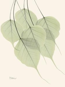 Bo Tree Leaves in Green by Albert Koetsier