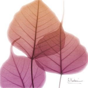 Bo Tree Pink Orange by Albert Koetsier