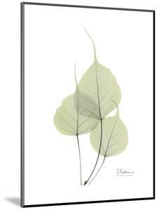 Bo Tree Portrait by Albert Koetsier