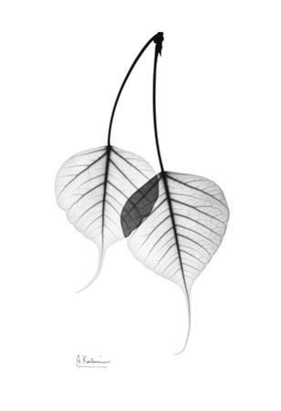 Bodhi Tree Leaves in Black and White by Albert Koetsier
