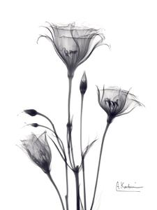 Bouquet of Gentian in Black and White by Albert Koetsier