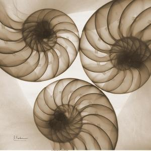 Brown Shell Triple by Albert Koetsier