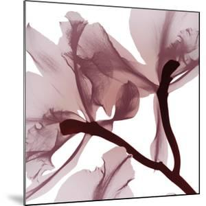 Burgundy Luster 2 by Albert Koetsier