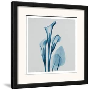 Calla Lilly Blue by Albert Koetsier