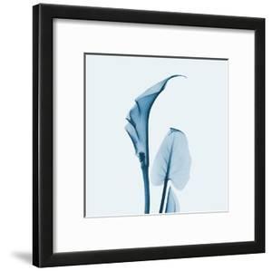 Calla Lilly in Blue by Albert Koetsier