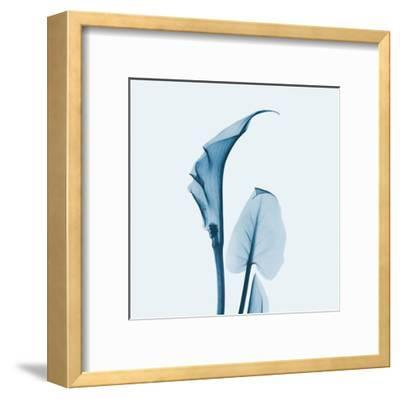 Calla Lilly in Blue