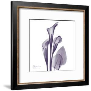 Calla Lilly Purple by Albert Koetsier