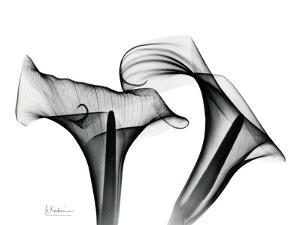 Calla Lily Close Up in Black and White by Albert Koetsier