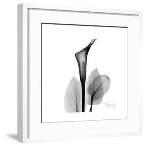 Calla Lily Gray 2 by Albert Koetsier