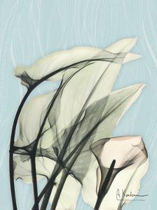 Calla Lily Leaves by Albert Koetsier