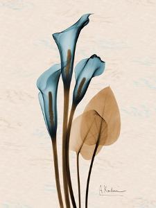 Calla Lily Moments by Albert Koetsier