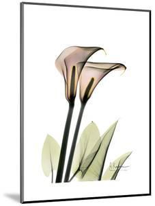 Calla Lily Portrait by Albert Koetsier