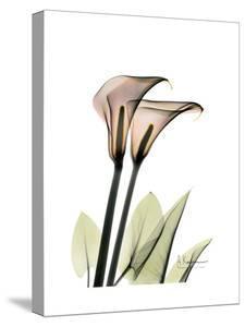 Calla Lily Portrait by Albert Koetsier