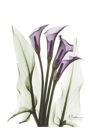 Calla Lily Quad in Color