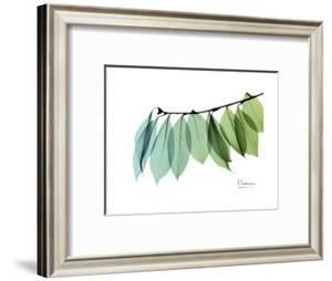 Camelia Leaf Green_Blue by Albert Koetsier
