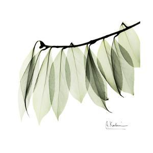 Camelia Leaf In White by Albert Koetsier
