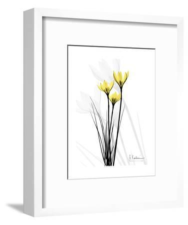 Canary Lily Portrait