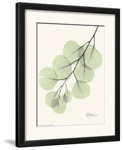 Cascading Eucalyptus by Albert Koetsier