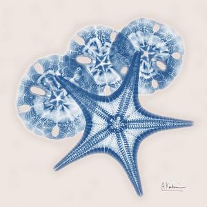 Cerulean Starfish and Sand Dollar by Albert Koetsier