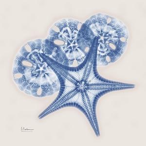 Cerulean Starfish and Sand Dollar by Albert Koetsier