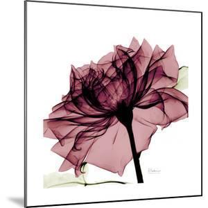 Chiant Rose 1 by Albert Koetsier